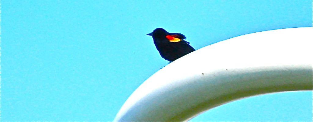crazybird